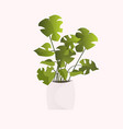 potted plant isolated on white background vector image
