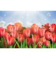 Red tulips flowers in the garden vector image vector image