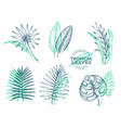 set tropical leaves hand drawn tropical summer vector image