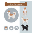 thai bangkaew dog breed infographic vector image