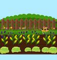 corn harvest garden countryside vector image