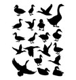 duck animal detail silhouettes vector image