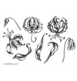 set hand drawn black and white gloriosa vector image vector image