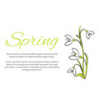 spring floral banner with text made of snowdrops vector image vector image