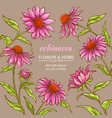 Echinacea purpurea frame vector image