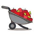 garden wheelbarrow with apples color farming vector image vector image