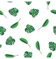 green leaves of tropical plant palm and tree on vector image
