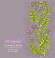 astragalus background vector image vector image