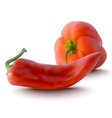 red peppers vector image