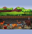 scene with many animals at zoo