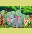 scene with many animals in forest vector image vector image