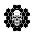 skull hexagon vector image vector image