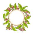clove branch frame vector image