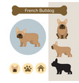 french bulldog dog breed infographic vector image