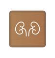 human kidney icon an internal organ human vector image