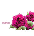 realistic pink roses bouquet beautiful flowers vector image vector image