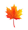 maple autumn leaf realistic flat vector image vector image