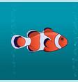 cute fish clown cartoon pic vector image