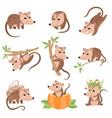 cute opossums animals in various poses set vector image vector image
