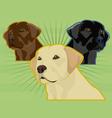 labrador retrievers vector image vector image