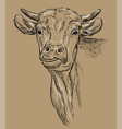 monochrome head bull hand drawing vector image