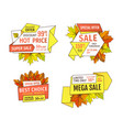 advertisement promo discount on thanksgiving day vector image vector image