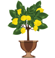 Lemon tree in a flowerpot