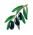 olives on branch hand drawn vector image