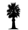 palm tree silhouette on white background vector image vector image