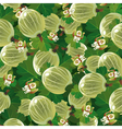 background of the green gooseberry vector image vector image