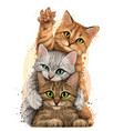 color graphic portrait three cute kittens vector image