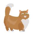 munchkin cat flat design vector image vector image