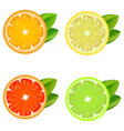 realistic detailed citrus set vector image vector image