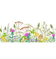 seamless border with autumn meadow plants