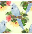 seamless texture bird budgerigar home pet blue vector image