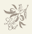 twig of olive decorative sketch vector image vector image