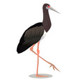 abdim s stork cartoon bird vector image vector image