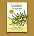 agricultural fresh olive tree branch banner vector image