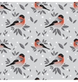 Bullfinches and snow pattern vector image vector image