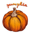 pumpkin vegetable hand drawn vector image