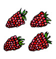 raspberry doodle style sketch isolated on vector image vector image