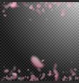 sakura petals falling down vector image
