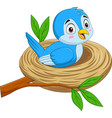 cartoon blue bird sitting in a nest vector image vector image