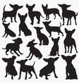 chihuahua silhouettes vector image vector image