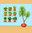 gardening set with many plants in pots vector image vector image