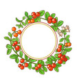 cranberry branch frame vector image