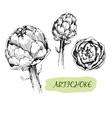 Artichoke vector image vector image