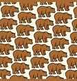 background pattern with wild bear vector image vector image
