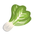 broccoli fresh vegetable isolated icon vector image