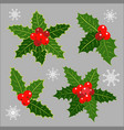 christmas decoration holly leaves collection vector image